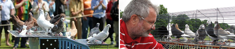 2014-08-29 Pigeons Composite
